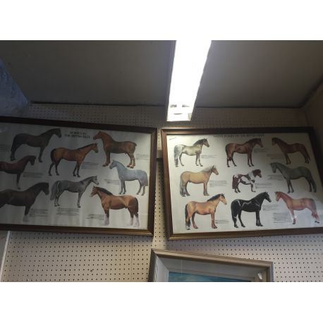 Horses & Ponies of the British Isles